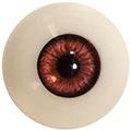 Couleur des yeux FG Brown